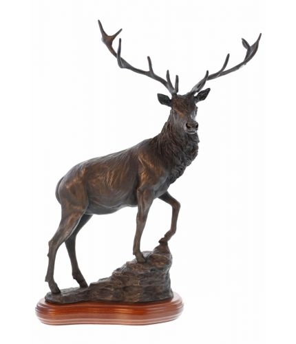 This is our sculpture of a Beautiful Highland Stag in full Autumn set. We've sculpted him as though he's climbing a mountainside and has stopped to take a final look. We offer a selection of wooden bases, some of whixch can have an engraved plate fitted.